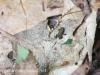 Tuscarora State Park American toad 25 (1 of 1).jpg