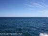 Freemantle to Rottnest Island-15