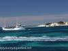 Freemantle to Rottnest Island-20