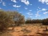 Uluru hike -11