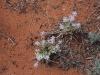 Uluru hike -4