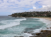 Austrlia Tamarama to Bronte (1 of 13)