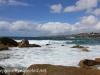 Clovelly Beach and Gordon's Bay (15 of 29)