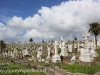 -Waverly Cemetery (14 of 22)