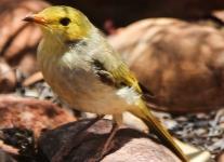 Desert Garden birds -1
