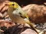 Australia Day Thirteen Uluru Deserrt garden hike birds February 16 2016