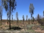 Australia Day Thirteen Uluru Desert Garden hilke February 16 2016