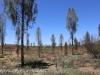 Uluru Desert Gardens hike -1