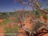 Uluru Desert Gardens hike -10