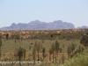Uluru Desert Gardens hike -19