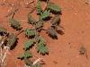 Uluru Desert Gardens hike -2