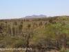 Uluru Desert Gardens hike -20