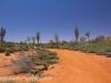 Uluru Desert Gardens hike -6