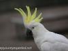 Katoomba parrots 11-1