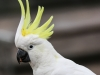 Katoomba parrots 12-1