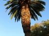 Australia Perth King's Park and Botanical gardens walk -11