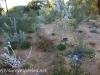 Australia Perth King's Park and Botanical gardens walk -17