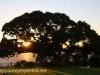 Australia Perth King's Park and Botanical gardens walk -5