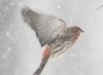 bird feeder house finch (33 of 40)