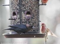 back yard birds-1