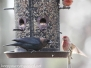 backyard birds March 30 2016