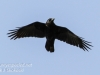 back yard birds-12