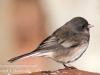 back yard birds-2