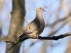 back yard birds-8