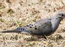 dove (2 of 5).jpg