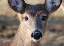 deer-2-of-7