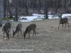 deer (1 of 11).jpg