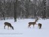 deer (10 of 11).jpg