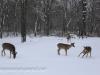 deer (11 of 11).jpg
