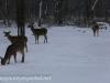 deer (3 of 11).jpg