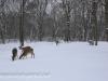 deer (6 of 11).jpg