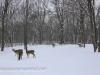 deer (7 of 11).jpg