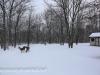 deer (8 of 11).jpg