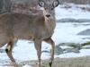 deer and turkey (18 of 21).jpg
