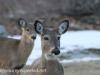 deer and turkey (19 of 21).jpg