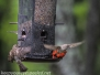 Backyard feeder may 20 2015