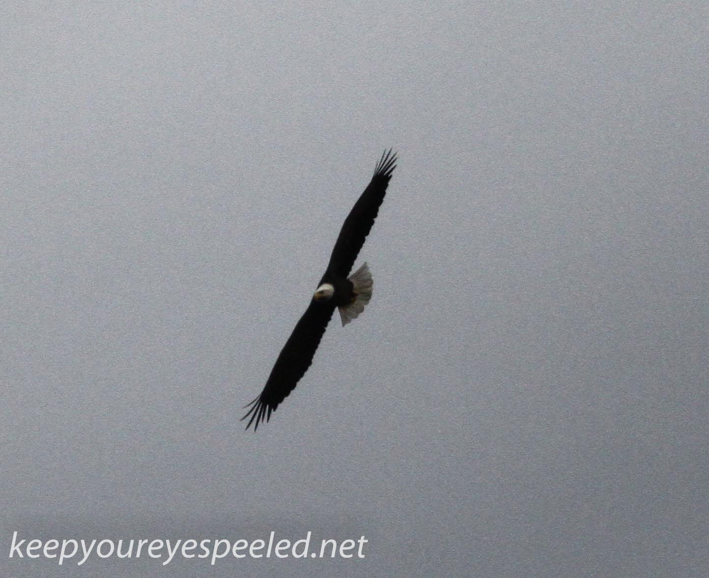 Eagle 432 (1 of 1)