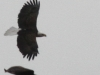Eagles 436 (1 of 1)
