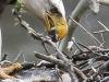 PPL Wetlands Bald eagle 2 (1 of 1).jpg