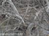 PPL Wetlands Bald eagle 3 (1 of 1).jpg