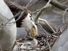 PPL Wetlands Bald eagle 5 (1 of 1).jpg