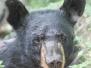 Bear visit July 23 2015