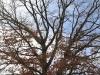 Beaver Meadows (35 of 54).jpg