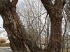 Beaver Meadows (40 of 54).jpg