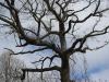 Beaver Meadows (41 of 54).jpg