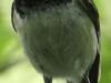 PPL wetlands black-capped chickadee 10 (1 of 1).jpg